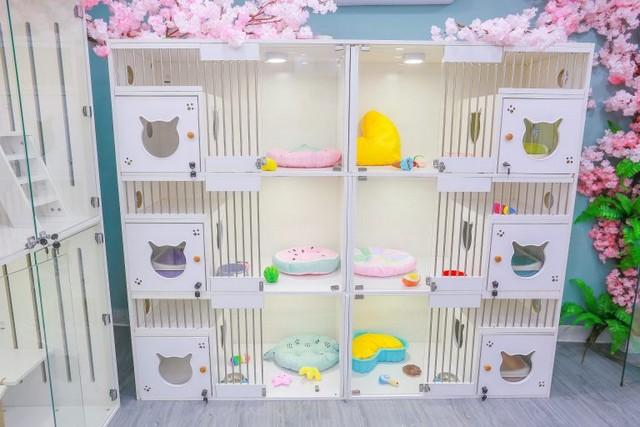 Pet Hotel cho mèo tại Kimi Pet với đầy đủ trang thiết bị