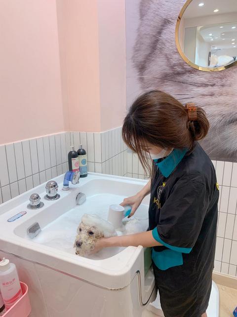 Nhân viên Kimipet với dịch vụ tắm chó TpHCM
