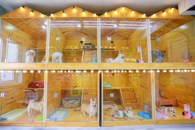 Phòng Penhouse cho chó tại Pet Hotel Kimi Pet