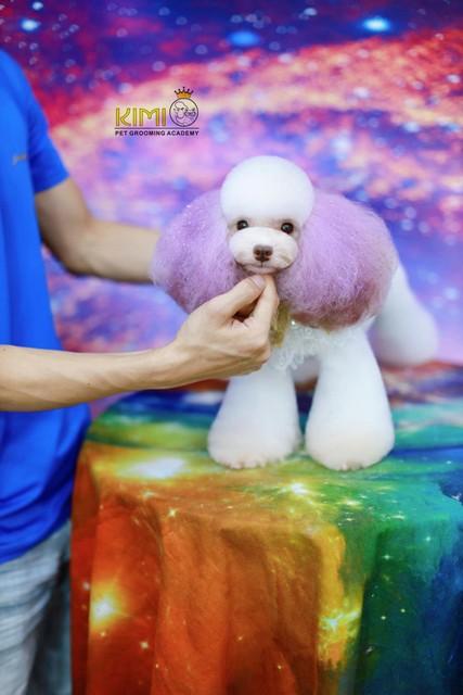 Một buổi thực hành của nam sinh trong khóa học cắt tỉa lông chó ở Hà Nội