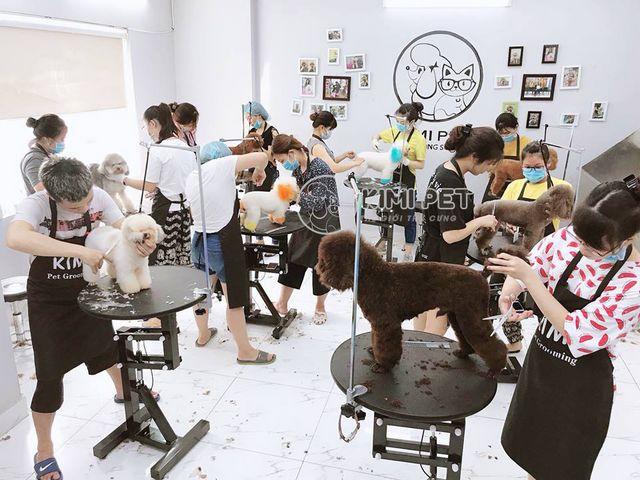 Chi phí mở spa thú cưng & #5 Kinh nghiệm bạn cần biết khi mở cửa hàng