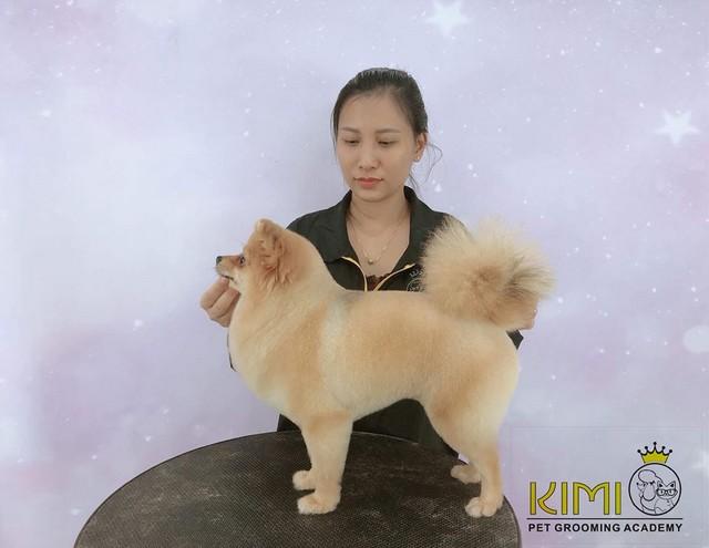 Học viên của Kimi Pet không chỉ cắt Phốc Sóc đẹp mà cắt Poodle cũng rất đẹp