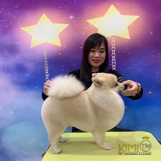 Thành quả của khóa học cắt tỉa lông chó TpHCM