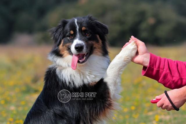 Với Clicker và đồ ăn, bạn có thể dễ dàng huấn luyện chó cưng