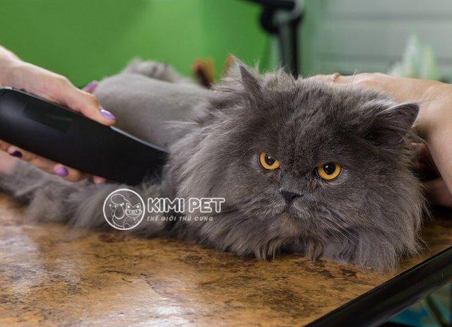 Hướng dẫn cách cạo lông cho mèo tại nhà chi tiết