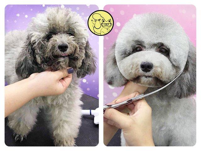 Sự thay đổi của thú cưng sau khi cắt tỉa, nhuộm lông tại trung tâm