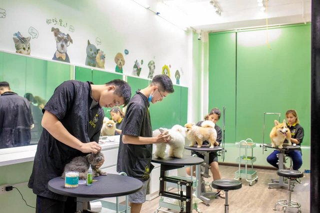 Đặt chú chó vào tư thế đứng để cạo lông chân dễ dàng