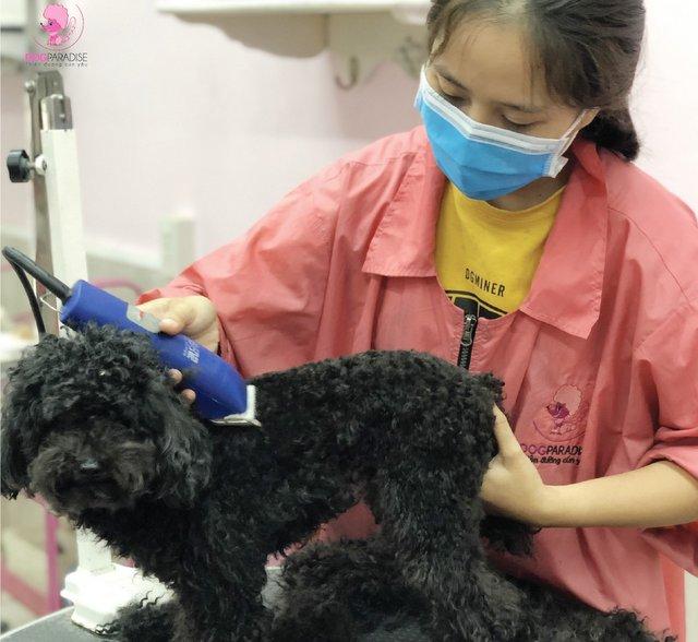 Tìm hiểu dịch vụ cắt tỉa lông chó tại nhà TPHCM - Nguồn: dogparadise.vn