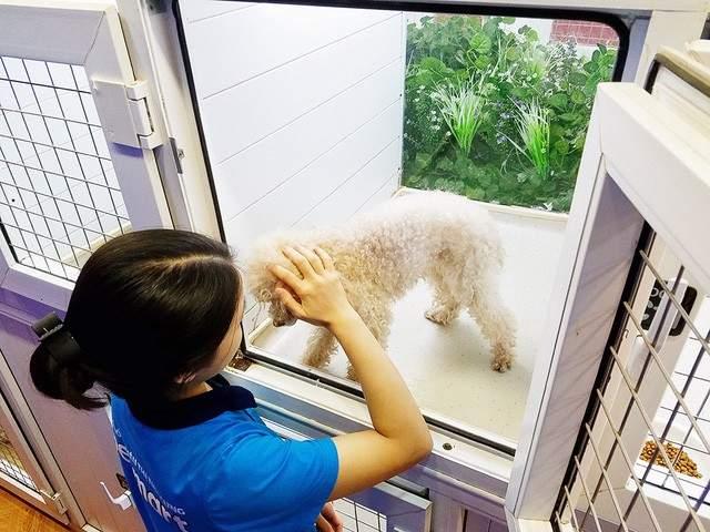 Dịch vụ trông giữ chó mèo Hà Nội tại Pet Mart - Nguồn: petmart.vn
