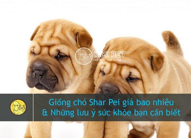 Giống chó Shar Pei giá bao nhiêu & Những điều cần lưu ý khi mua