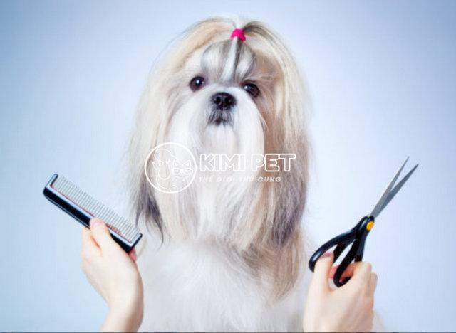 Chú chó xinh đẹp hơn sau khi cắt tỉa lông