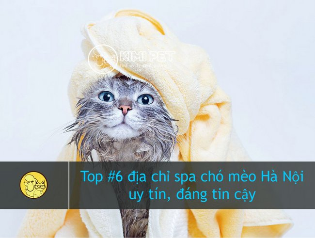 Bé mèo đang tận hưởng dịch vụ spa cho chó Hà Nội