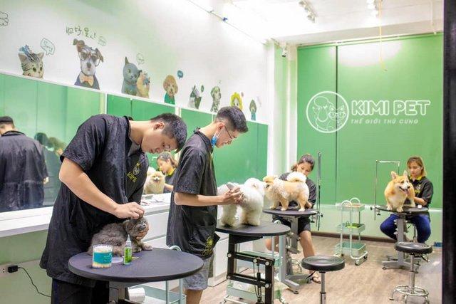 Những chú chó, bé mèo đang được nhân viên Kimi Pet chăm sóc nhiệt tình