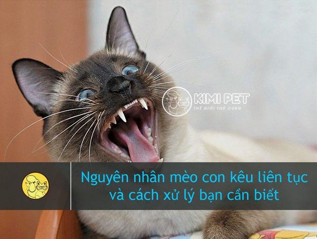 Tại sao mèo con kêu nhiều?