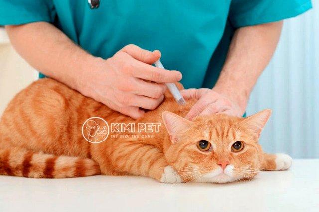 Tìm hiểu thuốc tránh thai cho mèo có thật sự tốt như lời đồn?