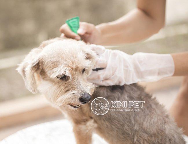 Tiêm thuốc trị ve chó có hại không và những tác dụng phụ nguy hiểm