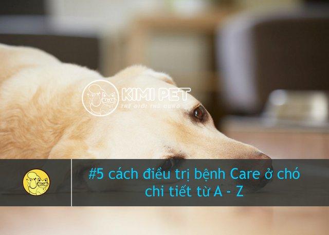 Chú chó mệt mỏi khi bị bệnh Care