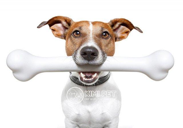 Chú chó và niềm đam mê mãnh liệt với những khúc xương