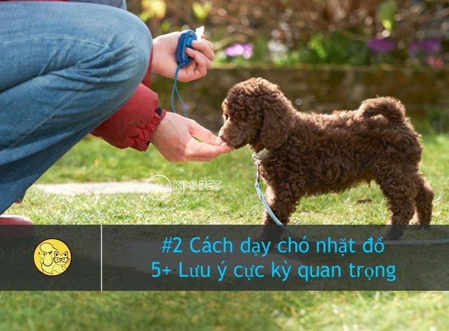 Training chó từ lúc nhỏ là rất quan trọng
